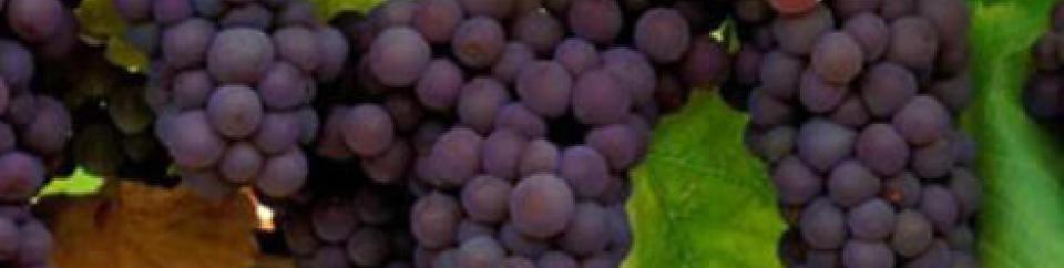 Vos vins préférés (locaux et regionnaux)